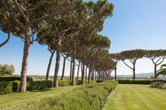 Pines in lines. Pines of old pines in two lines in a beautiful garden in Tuscany, Italy Stock Photo