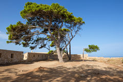Pines in the medieval fortress Stock Photography