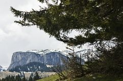 Pines and mountain Stock Images