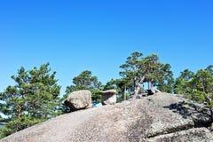 Pines on mountain Stock Photo