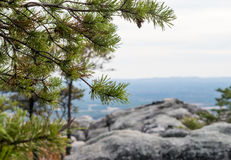 Pines in mountains, outdoors Stock Images