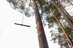 In the pines Royalty Free Stock Photography