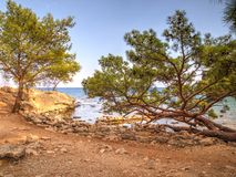 Pines Phaselis bay - Çamyuva, Kemer, coast and beaches of Turkey Royalty Free Stock Photos