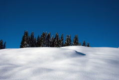 Pines rising from snow Royalty Free Stock Images