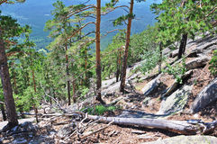 Pines on the rock. north kazakhstan 4 Stock Photos