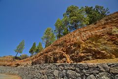 Pines on the rocks Stock Image