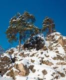 Pines on rocks Royalty Free Stock Photo