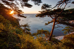 Pines on a rocks at the sea in the morning light Stock Photos