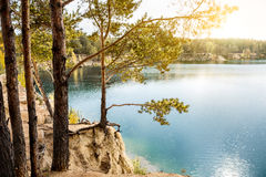 Pines on the rocky shore of the lake Royalty Free Stock Images
