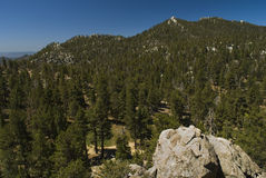 The Pines, San Jacinto Stock Photos