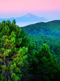 Pines, sea and mountains Stock Photos