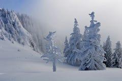 Pines with snow Stock Photos