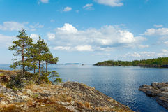 Pines on stone coast. Some pines on the bank of small island in Ladoga lake Royalty Free Stock Photography