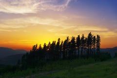 Pines at sunset Royalty Free Stock Image