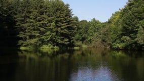 Pines Surrounding Pond stock video
