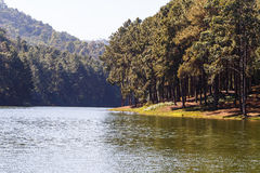Pines tree near lake and mountain Stock Image