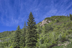 Pines trees at Paonia State Park mountain, Colorado Stock Photo