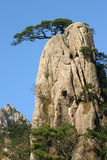 Pines trees on rock formation Stock Photo