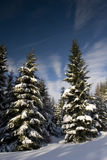 Pines under the snow Royalty Free Stock Photography