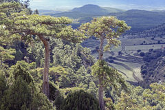 Pines and vegetation in the Sierra de Gudar Javalambre Stock Photography