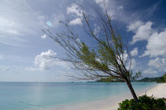 Pines and white sand of Church Valley beach - 1 Stock Image