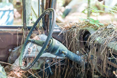Pinestraw on Dash of Old Car Royalty Free Stock Images