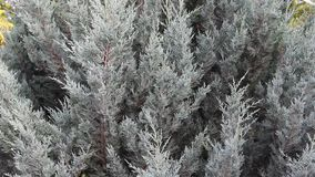 Pineta two. Image was shot in Burgas Bulgaria stock video footage
