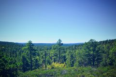 Pinetop Show Low Northern Arizona forest wilderness. Large forest of pine trees and blue skies Stock Photos