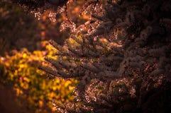 Pinetree Immagini Stock Libere da Diritti