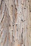 Pinetree Fotografia Stock