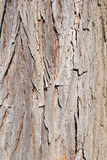 PineTree. Close up of bark on a pine tree Stock Photo