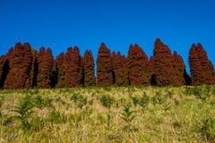 Pinetree di rosso di autunno Fotografia Stock