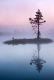 Pine tree in mist in marsh in Estonia Stock Photo