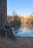 Pinetree and lake Royalty Free Stock Images