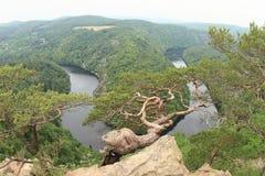 Pinetree na widoku na rzecznym Vltava, Vyhlidka Maj - fotografia stock