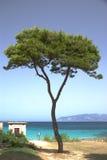Pinetree sur le bord de la mer Photographie stock