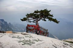 A pinetree at the top of mountain Hua Stock Photos