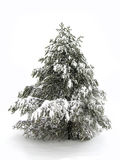 Pinetree in Winter Snow. One single pinetree in the winter covered with snow Stock Images