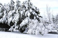 Scenic View of Trees heavy with snow Stock Photo
