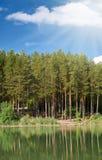 Pinetrees e lago Imagens de Stock