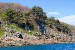 Pinetrees sur le bord de mer photographie stock libre de droits
