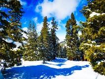 Pinetrees stock photos
