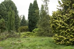 Conifers in a pinetum in the Netherlands. Pinetum Ter Borgh in Anllo in the Dutch province Drenthe is a small but intgeresting garden with conifers Royalty Free Stock Images
