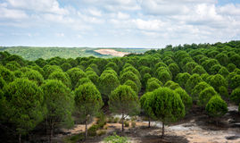 pinewood Τοπίο της Τουρκίας στοκ φωτογραφία με δικαίωμα ελεύθερης χρήσης