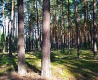 pinewood Arkivfoton