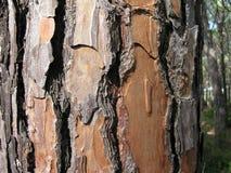 pinewood Fotografía de archivo