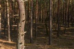 pinewood стоковые изображения