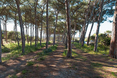 Pinewood in Alghero. Maria Pia pinewood in Alghero, Sardinia Stock Images