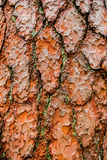 Pinewood bark Royalty Free Stock Photos