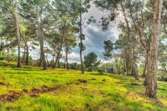Pinewood on a cloudy day in hdr Royalty Free Stock Photography